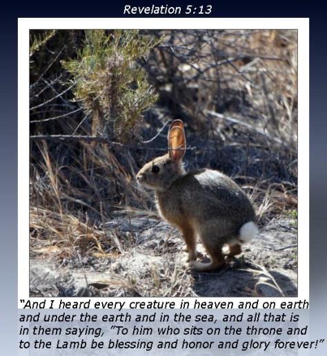 Revelation 5-13 Rabbit