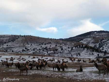 Elk dotting the landscape