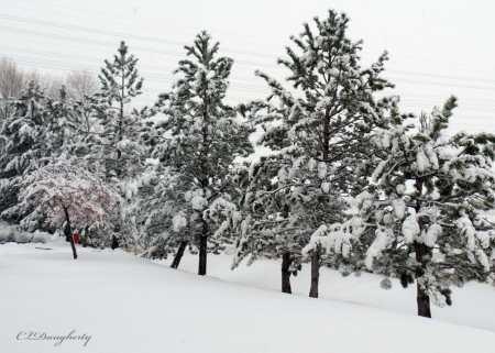 SLC Snowstorm Dec 2015