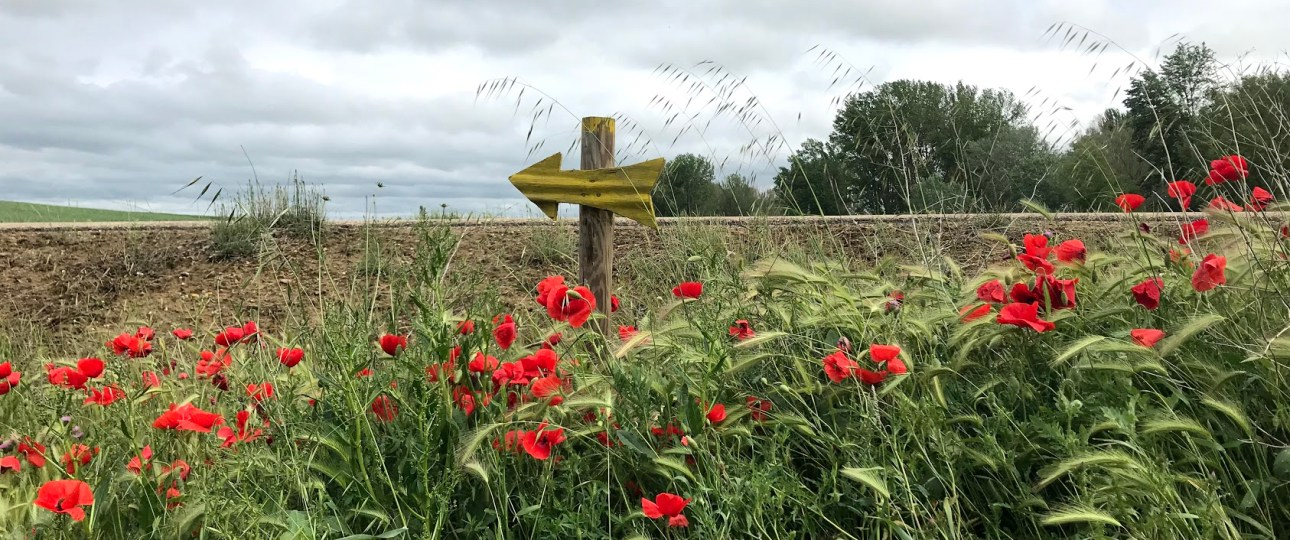 Camino marker with poppies