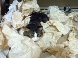 Grady in packing paper