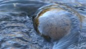 stock-footage-water-flows-over-a-rock-in-the-river-hd