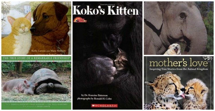 Gif Unlikely Love Collage The Cusp Five Unlikely But True Love Stories From The Animal Kingdom Pray