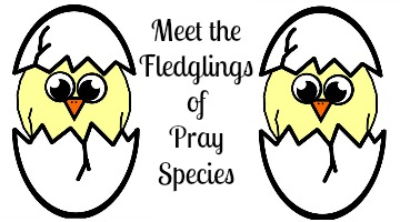 meet the fledglings image