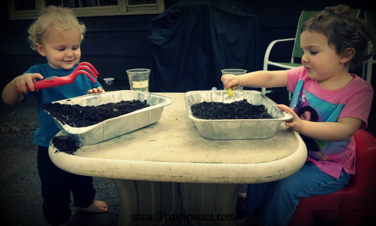 finding vegetables in the dirt