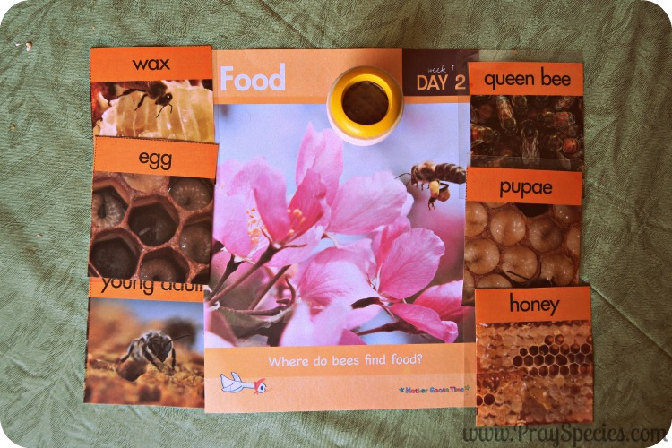 Day 2 Food all about bees and food discussion cards