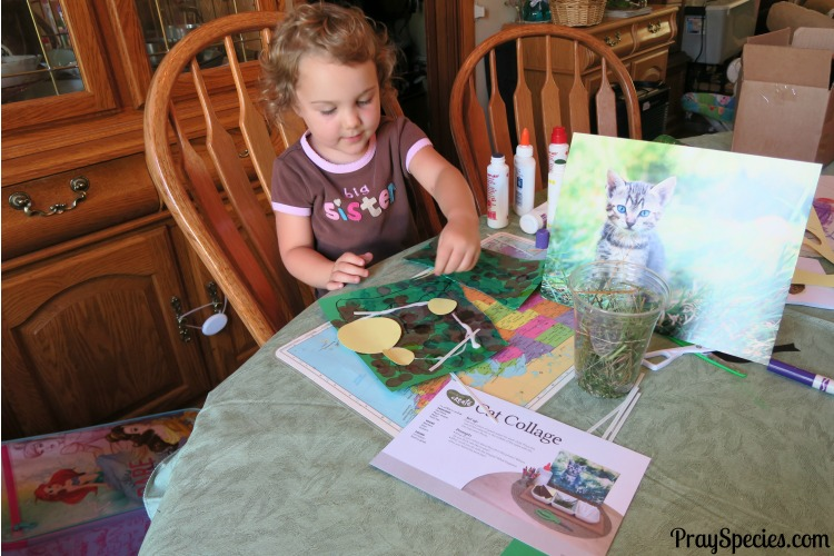 Invitation to Create Cat Collage MGT