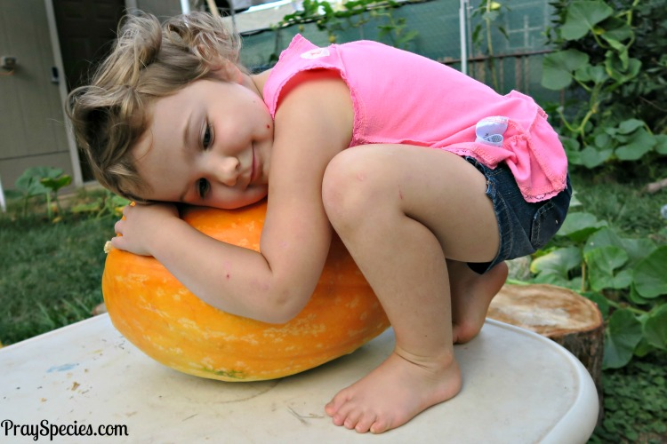 ladybug-loves-her-pumpkin-grown-in-her-very-own-backyard