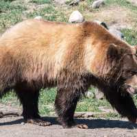 Praying in Montana: Grizzly Bears