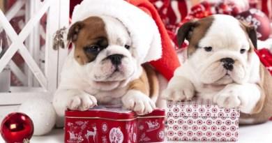 Что подарить близким и родным на Новый год Собаки 2018 — интересные идеи