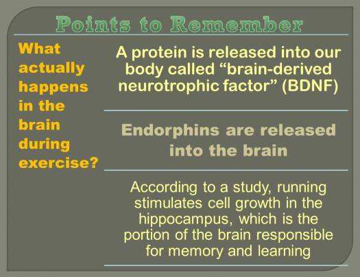 brain activity_1