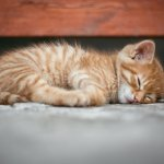 Comment s'endormir rapidement ?