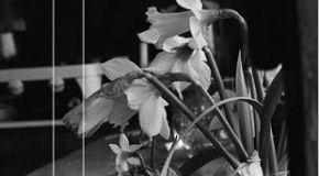 La vida y la muerte se debaten en el nuevo libro de Díez