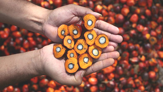 Palm oil imports drop 2.31 per cent in January: SEA