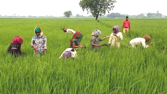 Govt lays out procedure for claiming benefits under TMA scheme for agri exports