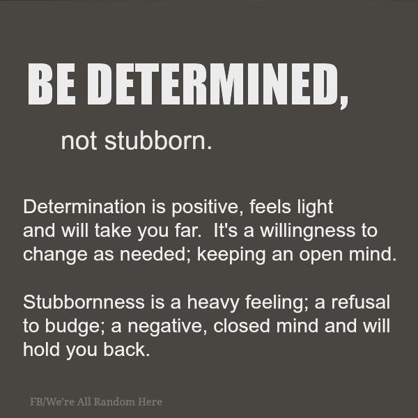 stubborn2