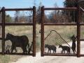 drive gate - bears 2