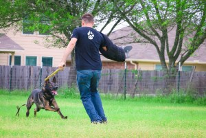 dogs trainer in action