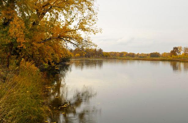 Acid Rain Experiments: Measuring the pH of Natural Water
