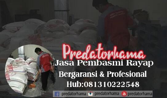 Perusahaan jasa anti rayap Kayu Depok I Hub:0813-1022-2548