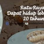 Jasa Basmi Rayap Jakarta Barat