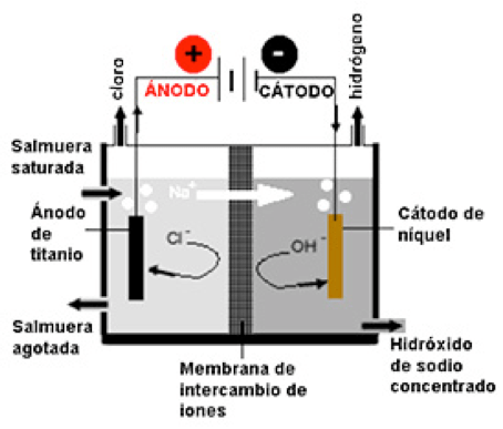 Figura 1. Membrana celular.