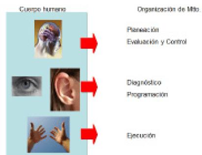 Figura 6. Símil entre el cuerpo humano y los roles de una organización de mantenimiento.