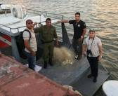 SEMMA realiza ação de fiscalização e monitoramento do defeso no Rio Tocantins