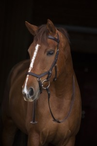 Horseware Rambo Micklem Competition Trense