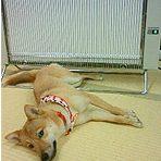 愛犬とサンラメラ