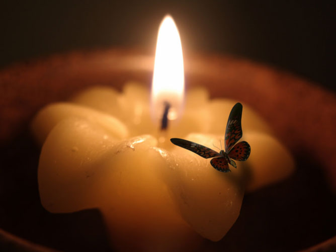 Moth-Flying-into-Fire