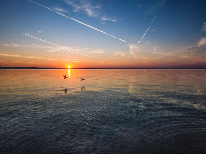Sunrise-over-the-Ocean-with-Swans-Flying-By