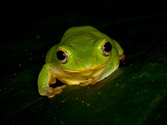 Frog-in-the-dark
