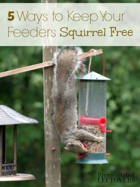 5 Natural Ways to Keep Squirrels Away from Bird Feeders- Are squirrels taking over your bird feeders? Try these 5 tricks to keep squirrels at bay naturally.