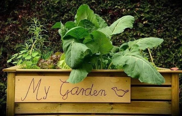 planning garden