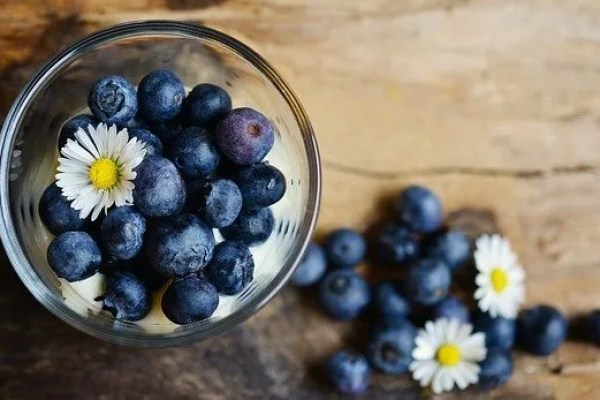 How To Grow Blueberries In Your Backyard Or Home Garden