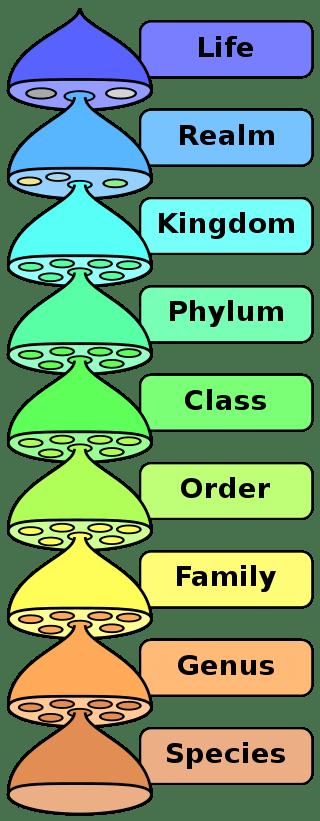 Biological Classifications List