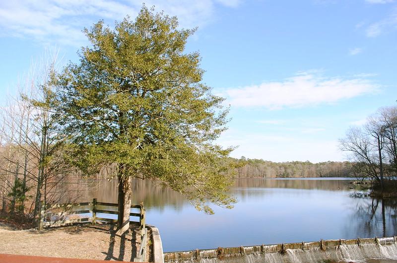 Trap Pond Delaware Fishing