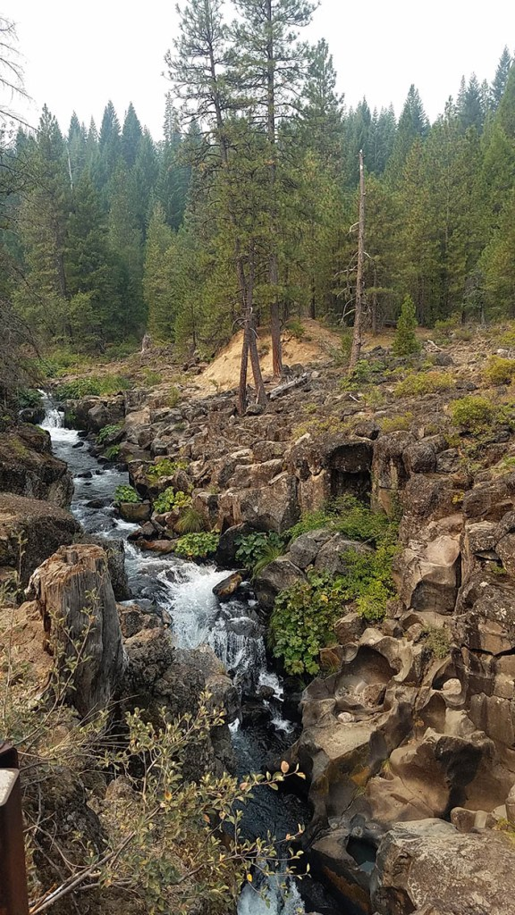 The Ultimate Guide to Success On the McCloud River_Trout Fishing