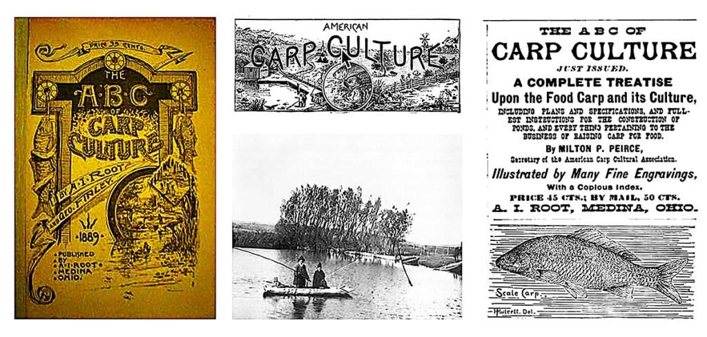 Carp Fishing in America