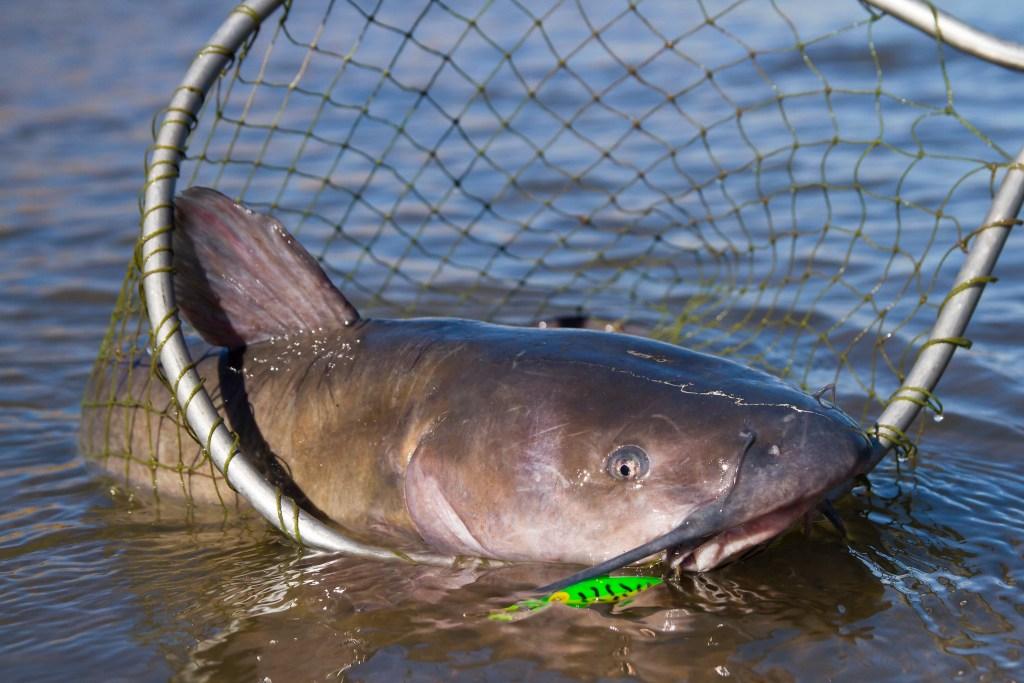 West Virginia Catfish Stocking