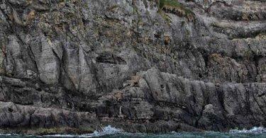 Gobbins Coastal Path