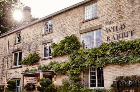 Wild Rabbit, Cotswold, Oxfordshire