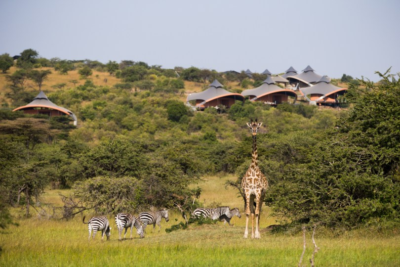 An early arrival for the Great Migration in Kenya