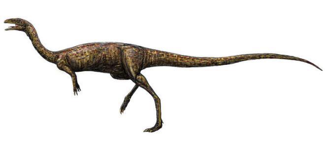 01elaphrosaurus