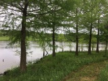 Twisted Tine Pond 5