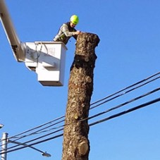 Tree removal near powerlines in the Ephrata, PA area