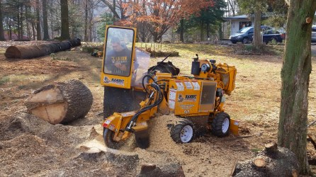 Stump grinder at work