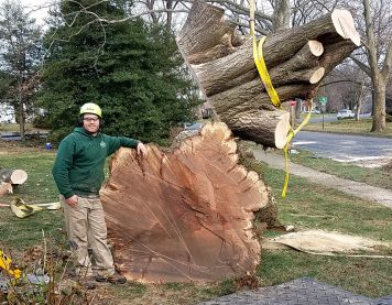 We can remove large trees, even in tight residential locations.