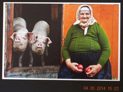 """Concorso Fotografico Vittorio Bachelet 2014. Premio Speciale Foto Simpatia: Sandra Zagolin (Piove di Sacco) con """"I due maialini"""""""
